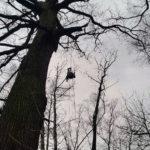 Arborystyka warszawa, wycinka drzew pielęgnacja drzew warszawa
