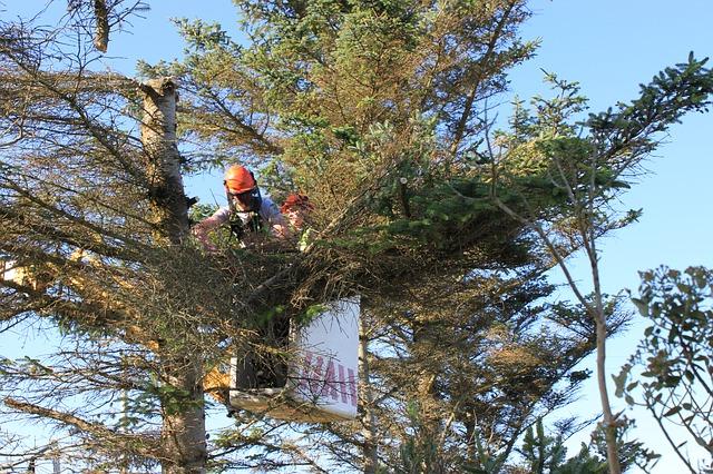 Arborystyka- czyli jak zadbać odrzewa?